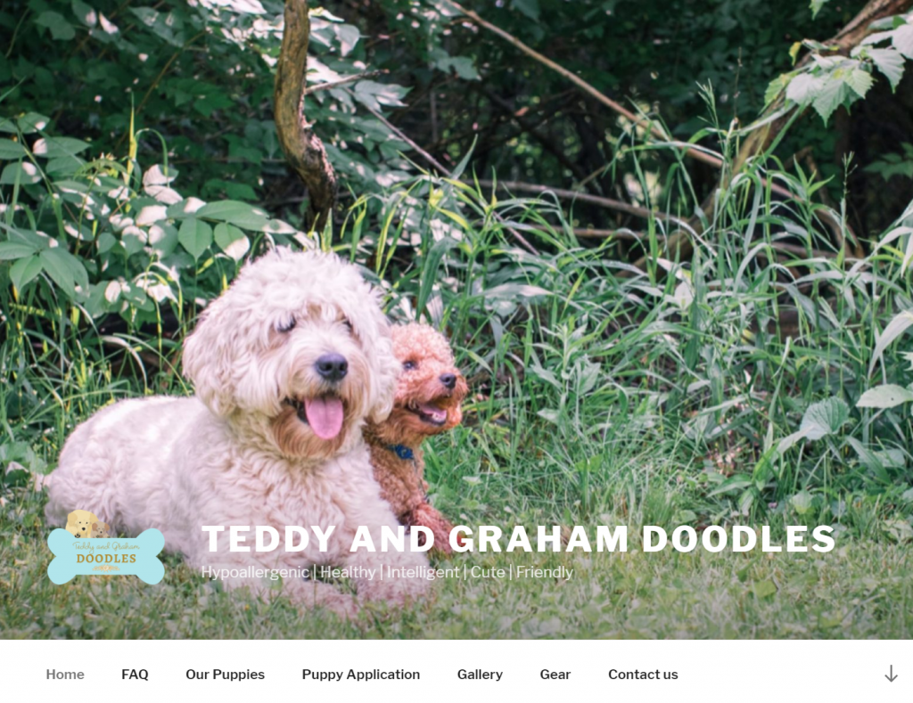Teddy and Graham Doodles